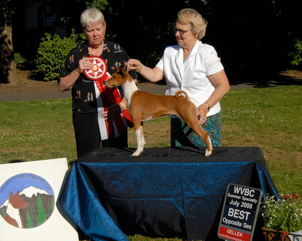 Activities & Events - Willamette Valley Basenji Club